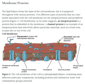 Screenshot of membrane protein from open textbook